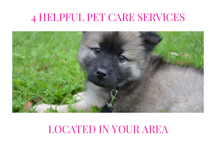 4 Helpful Pet Care Services Located In Your Area
